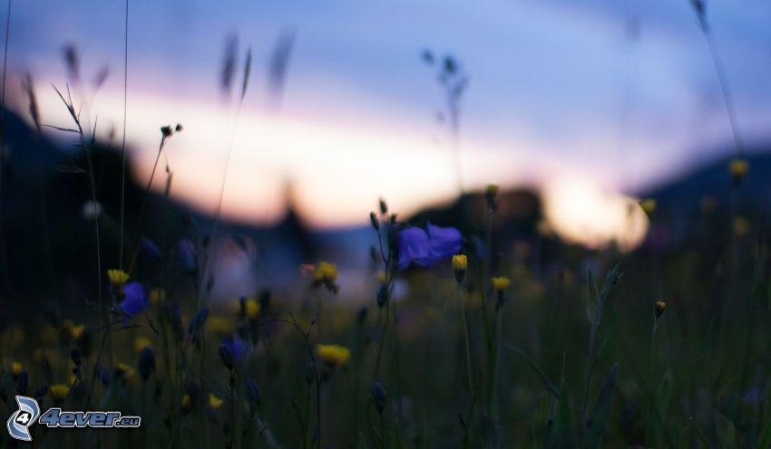 paja de hierba, prado