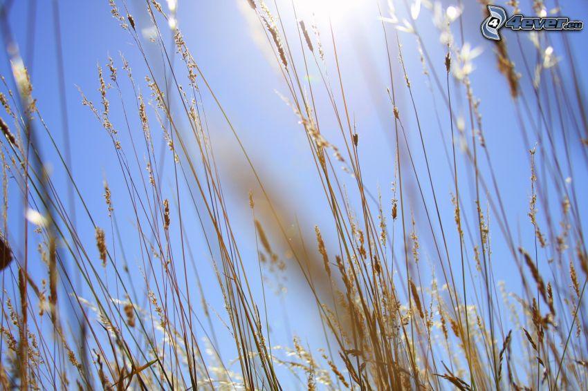 paja de hierba, sol