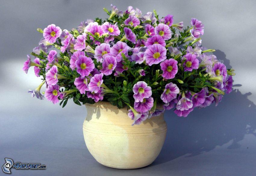 petunia, flores de coolor violeta, flores en un florero