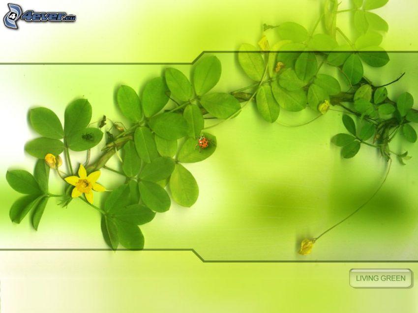 planta, flor amarilla, mariquita