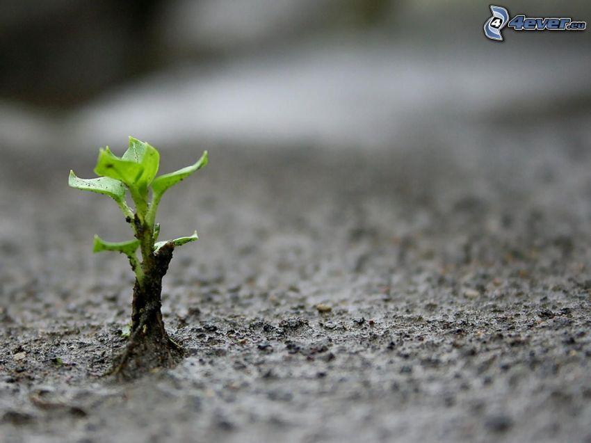 planta, tierra