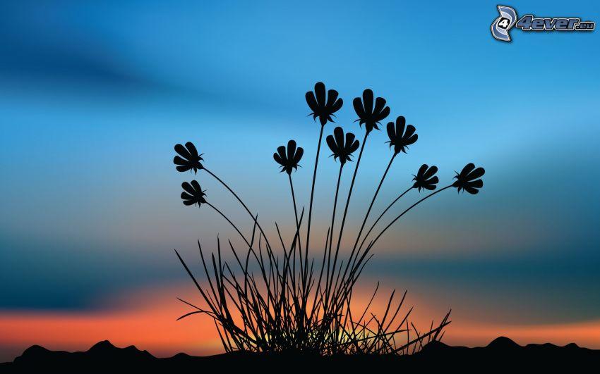 plantas, silueta, después de la puesta del sol