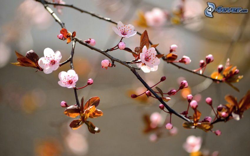 rama en flor