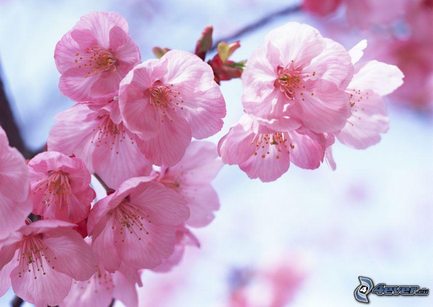 ramita en flor