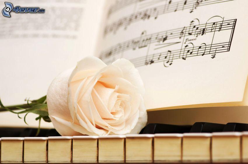 Rosa Blanca, piano, notas de música