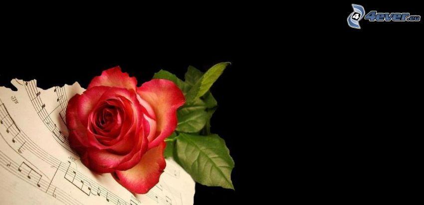 rosa roja, notas de música, papel