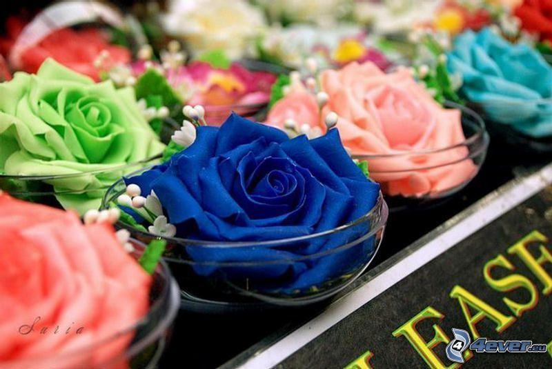 rosas, rosa azul