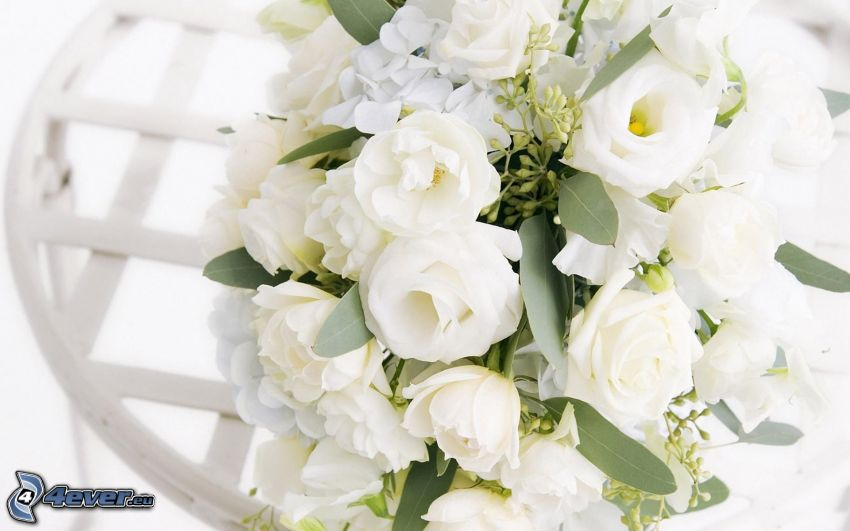 rosas blancas, ramo de rosas