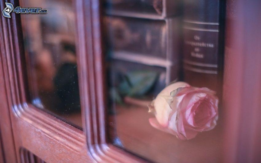 rosas de color rosa, ventana