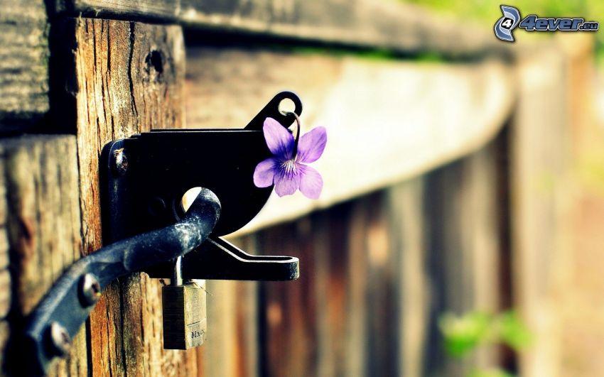violeta, bloque, puerta de madera