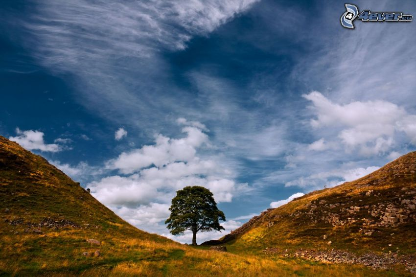 plátano, árbol solitario, colina, nubes