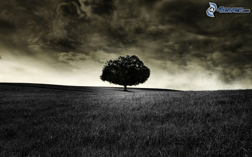 prado, árbol solitario, nubes, blanco y negro