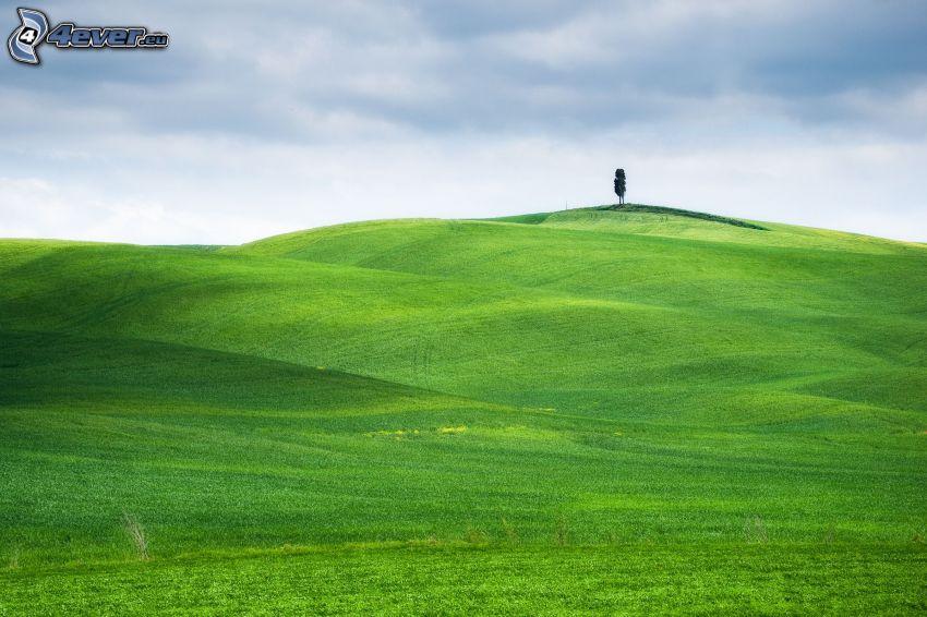 prado, árbol solitario