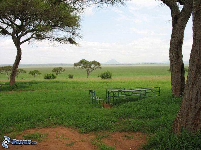 prado, árboles, banco