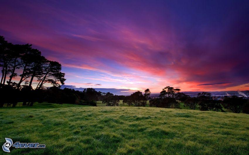 prado, árboles, cielo púrpura