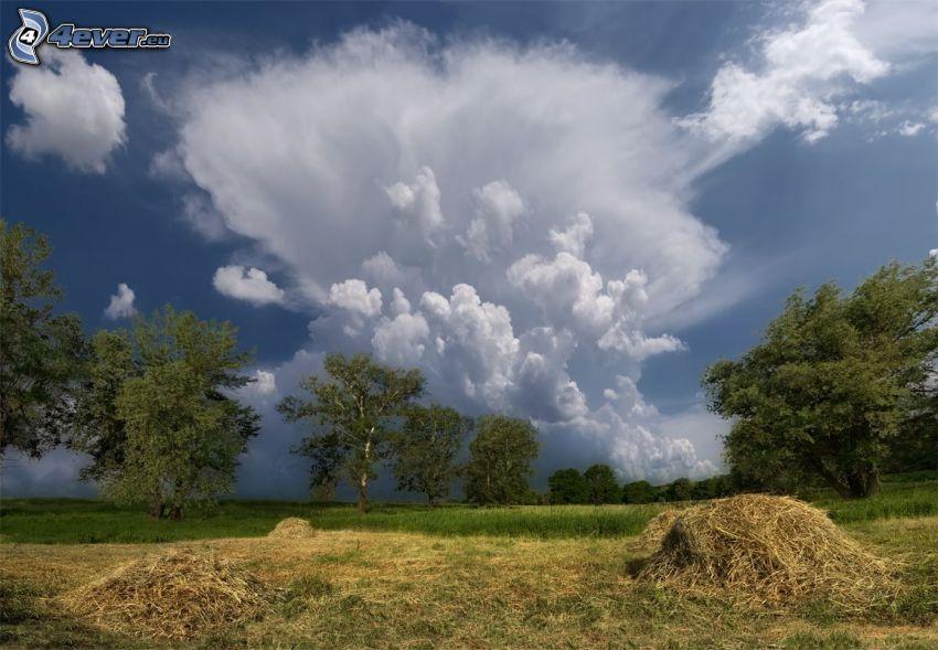 prado, árboles, heno, nubes