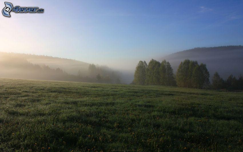 prado, bosque, niebla baja