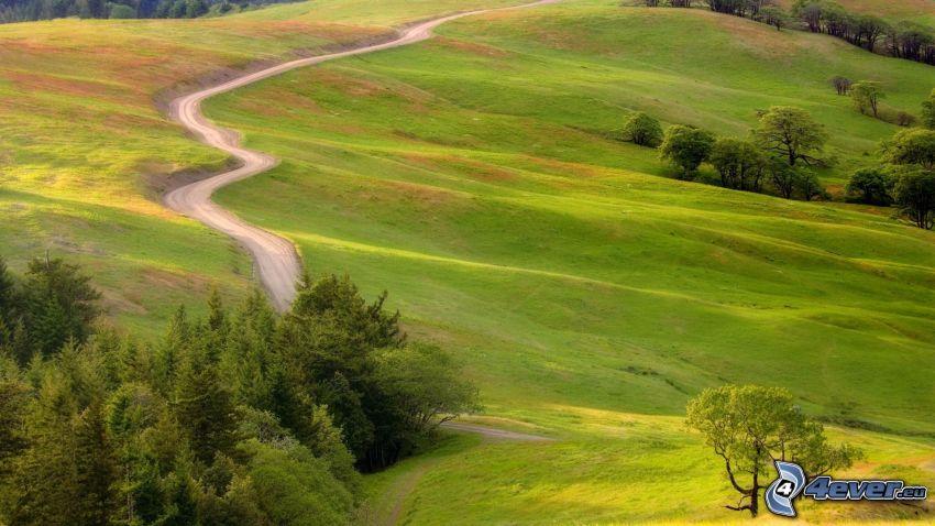 prado, camino, árboles