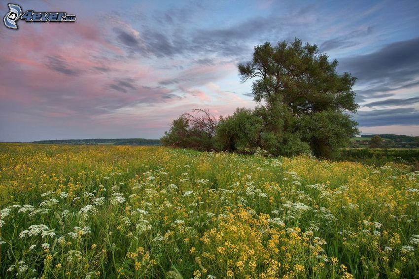 prado, flores de campo, árbol ramificado
