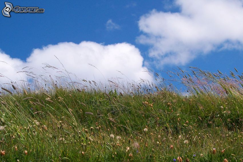 prado, paja de hierba, nubes