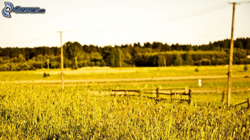 prado amarillo, cerco de madera