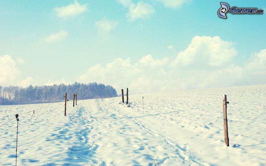 prado cubierto de nieve, columnas, bosque