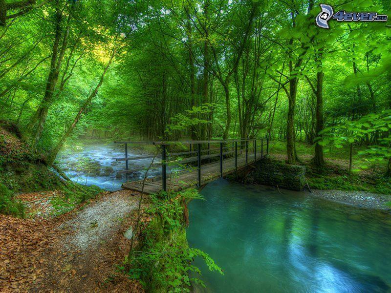 puente de madera en el bosque, corriente que pasa por un bosque, árboles verdes