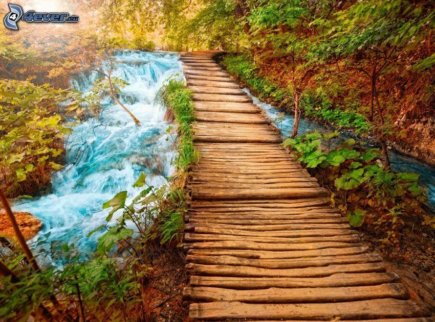 puente de madera en el bosque, corriente que pasa por un bosque, verde