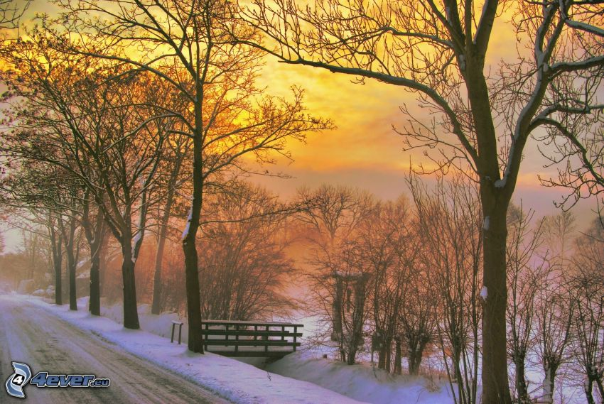 puesta de sol de invierno, árboles, nieve