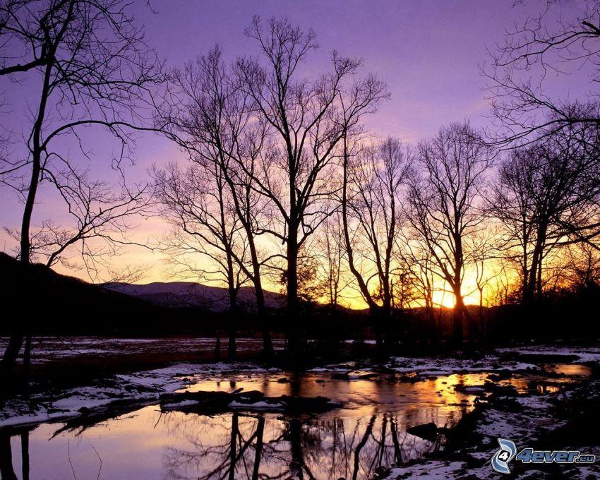 puesta de sol púrpura, siluetas de los árboles, río