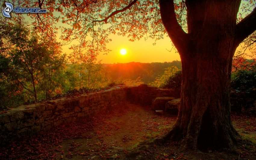 puesta de sol sobre bosque, árbol, muro de piedra
