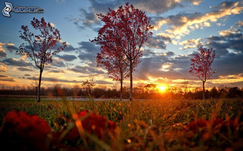 puesta de sol sobre la pradera, árboles otoñales, hierba, nubes