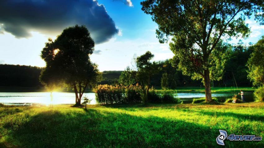 puesta de sol sobre un lago, robles