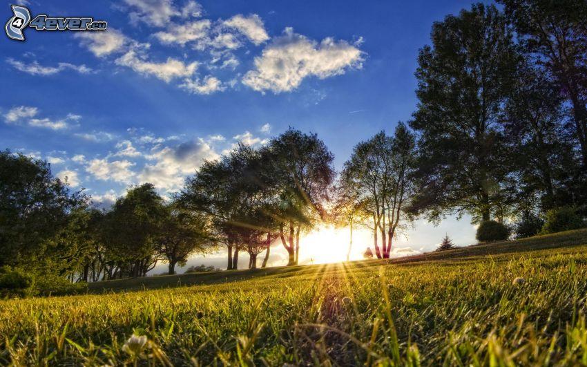 puesta del sol, prado, hierba, árboles