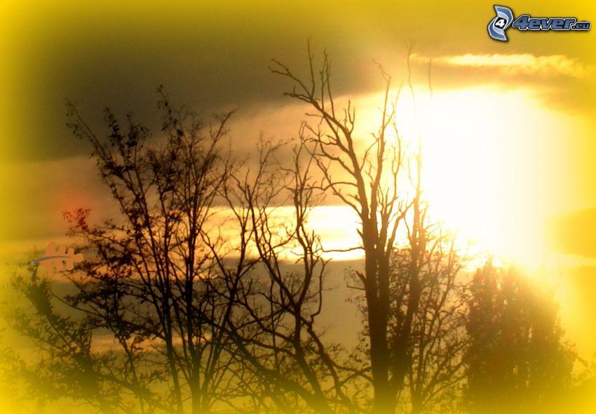 puesta del sol, ramas, siluetas de los árboles