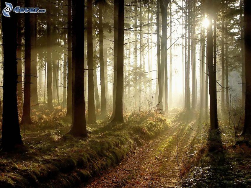 puesta del sol en el bosque, caminos forestales