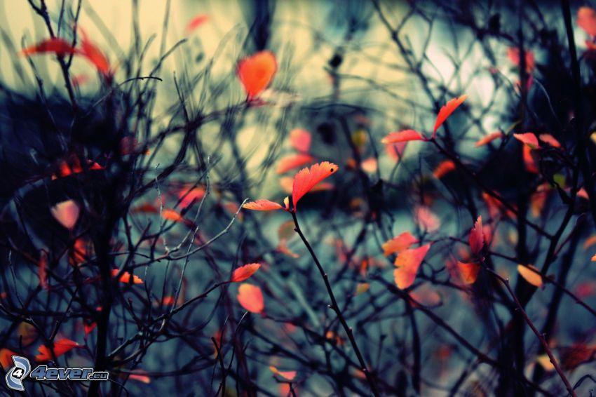 ramas, hojas rojas