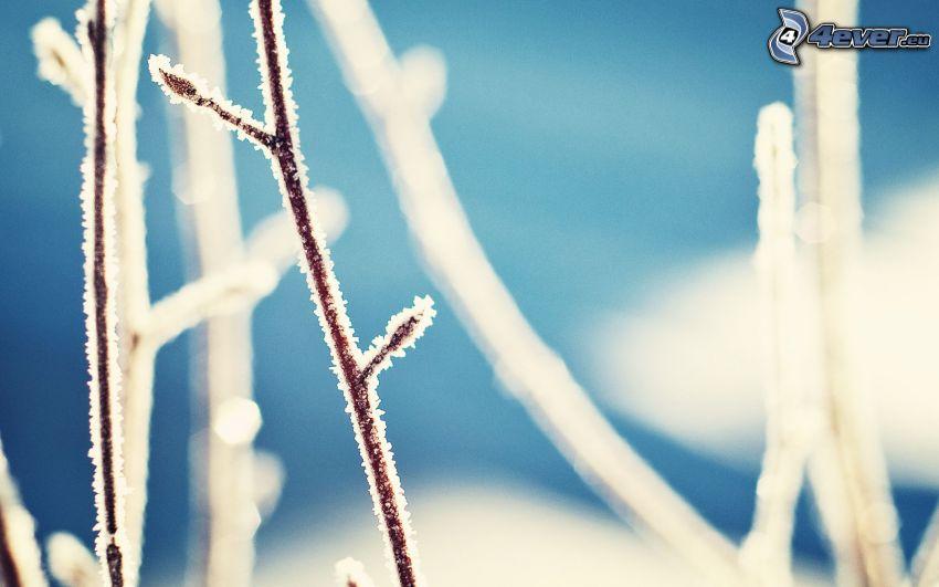 ramas congeladas