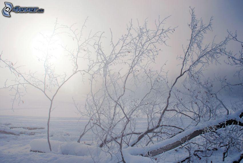 ramas cubiertas de nieve
