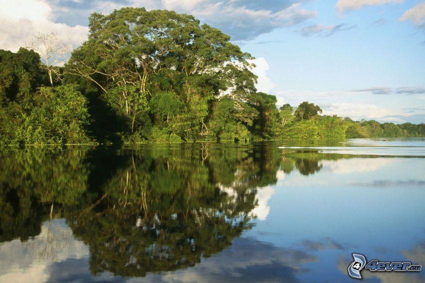 río, árboles, nivel de aguas tranquilas, reflejo
