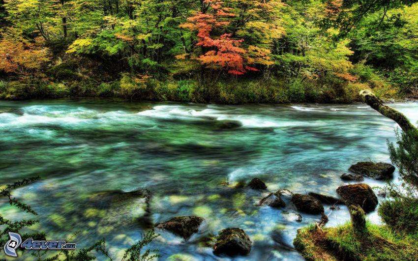 río, árboles, orilla, HDR