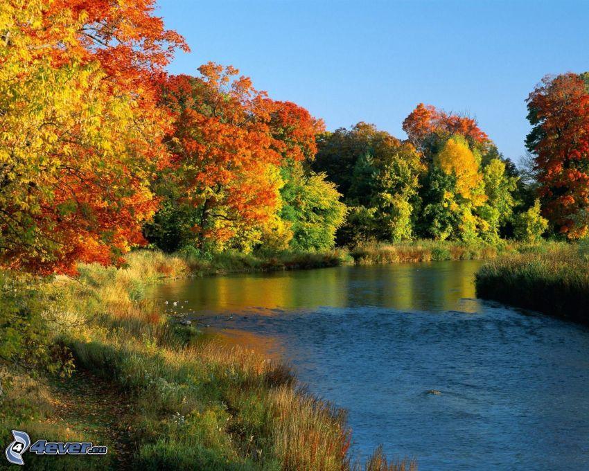 río, árboles otoñales