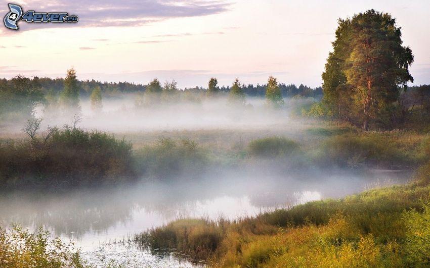 río, bosque, niebla baja