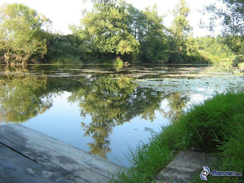 río, bosque, reflejo