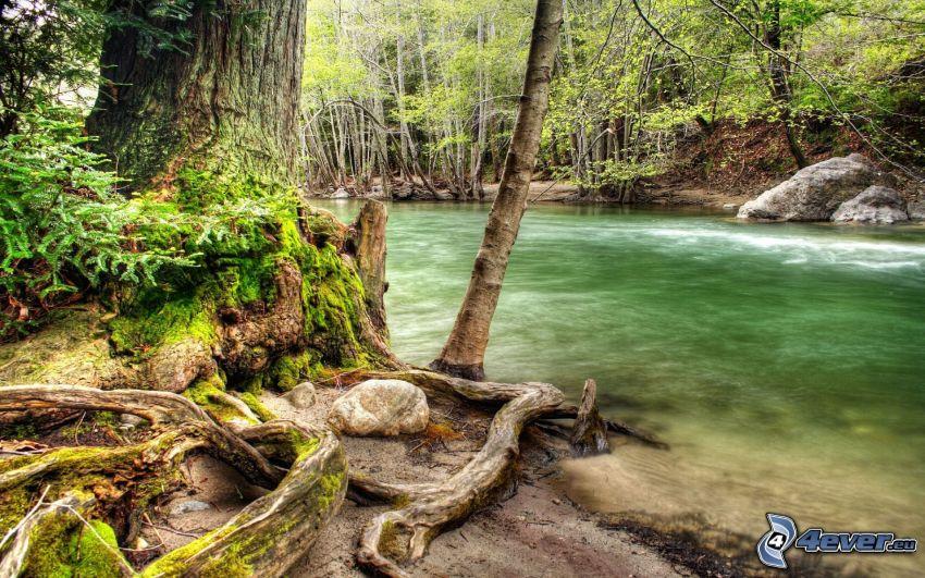 río, bosque, tribu