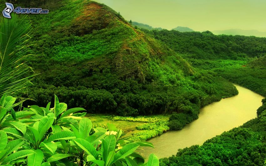río, colina, selva