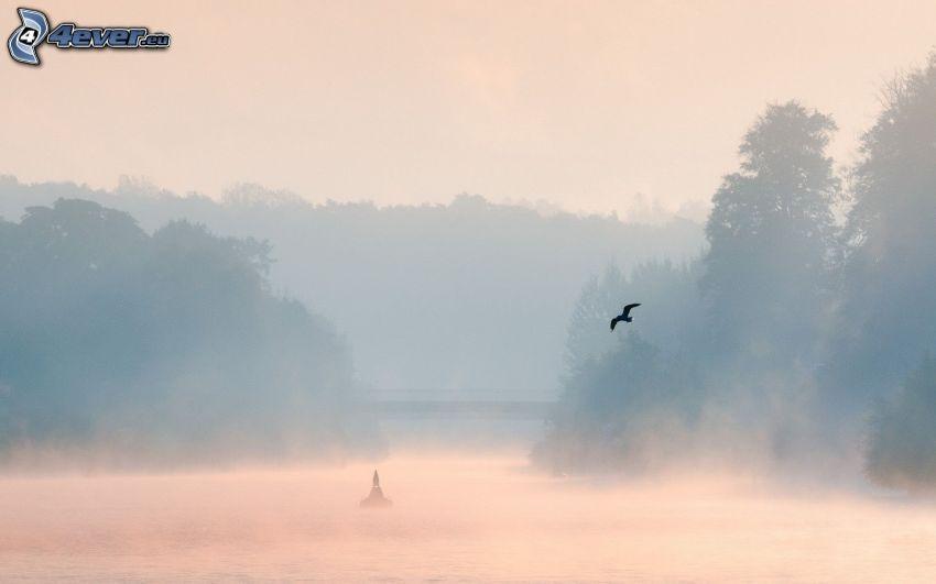 río, niebla baja, bosque, pájaro