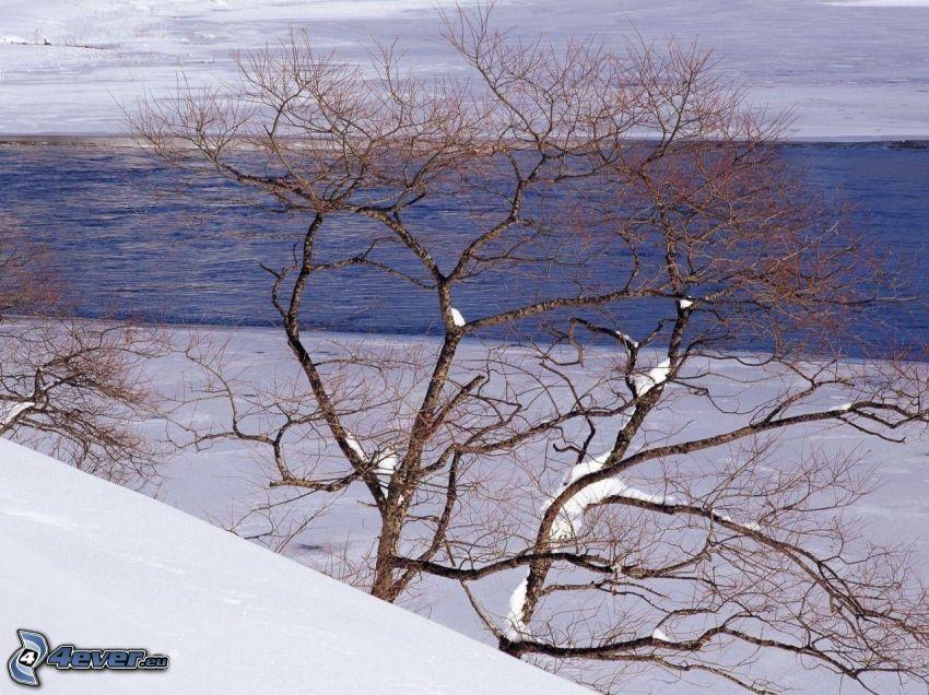 río, nieve, árbol