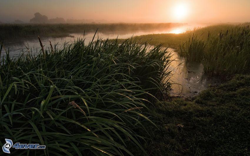 río, paja de hierba, niebla baja
