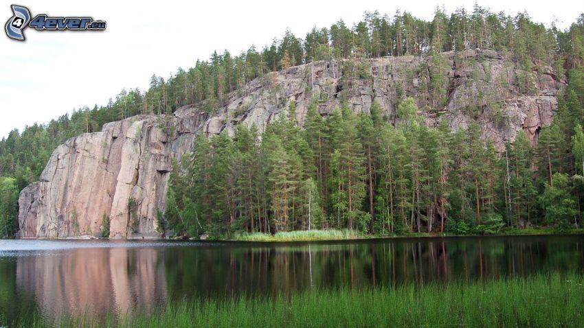 roca, árboles coníferos, lago
